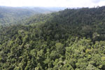 Selectively logged forest in Borneo -- sabah_aerial_2250