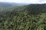 Selectively logged forest in Borneo -- sabah_aerial_2251