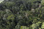 Selectively logged forest in Borneo -- sabah_aerial_2252
