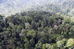Selectively logged forest in Borneo -- sabah_aerial_2253