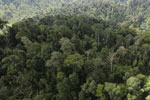Selectively logged forest in Borneo -- sabah_aerial_2254