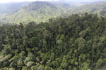 Selectively logged forest in Borneo -- sabah_aerial_2256