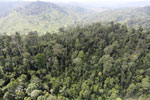 Selectively logged forest in Borneo -- sabah_aerial_2257