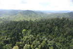 Selectively logged forest in Borneo -- sabah_aerial_2258