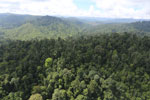Selectively logged forest in Borneo -- sabah_aerial_2260