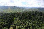 Selectively logged forest in Borneo -- sabah_aerial_2262