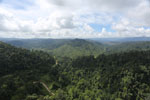 Selectively logged forest in Borneo -- sabah_aerial_2265