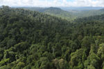 Selectively logged forest in Borneo -- sabah_aerial_2266