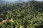 Logging road in Malaysia -- sabah_aerial_2267