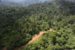 Logging road in Malaysia -- sabah_aerial_2269