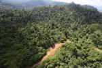 Logging road in Malaysia -- sabah_aerial_2271