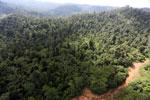 Logging road in Malaysia -- sabah_aerial_2272