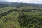 Forest converted to oil palm plantations in Borneo