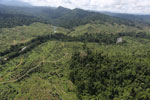 Rainforest converted to oil palm plantations in Borneo -- sabah_aerial_2276
