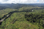 Rainforest converted to oil palm plantations in Borneo -- sabah_aerial_2277