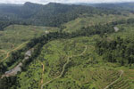 Rainforest converted to oil palm plantations in Borneo -- sabah_aerial_2279