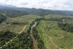 Rainforest converted to oil palm plantations in Borneo -- sabah_aerial_2281