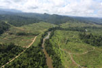 Rainforest converted to oil palm plantations in Borneo -- sabah_aerial_2282