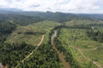 Rainforest converted to oil palm plantations in Borneo -- sabah_aerial_2284