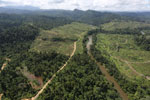 Rainforest converted to oil palm plantations in Borneo