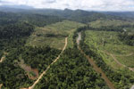 Rainforest converted to oil palm plantations in Borneo -- sabah_aerial_2286