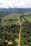 Rainforest converted to oil palm plantations in Borneo -- sabah_aerial_2289