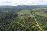Rainforest converted to oil palm plantations in Borneo -- sabah_aerial_2291