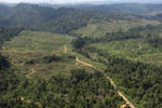 Rainforest converted to oil palm plantations in Borneo -- sabah_aerial_2292