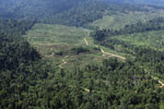 Rainforest converted to oil palm plantations in Borneo -- sabah_aerial_2294