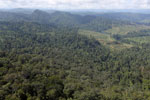 Rainforest converted to oil palm plantations in Borneo -- sabah_aerial_2298