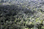 Selectively logged rainforest in Borneo