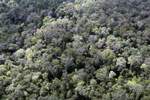 Selectively logged rainforest in Borneo -- sabah_aerial_2300
