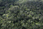 Selectively logged rainforest in Borneo -- sabah_aerial_2301