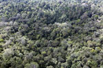 Selectively logged rainforest in Borneo -- sabah_aerial_2302