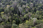 Selectively logged rainforest in Borneo -- sabah_aerial_2303
