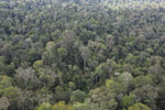 Selectively logged rainforest in Borneo -- sabah_aerial_2304