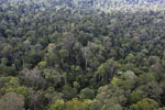 Selectively logged rainforest in Borneo -- sabah_aerial_2305