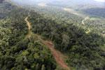 Logging road in Borneo -- sabah_aerial_2320