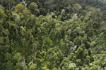 Selectively logged forest in Borneo -- sabah_aerial_2324