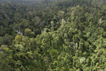 Selectively logged forest in Borneo -- sabah_aerial_2325