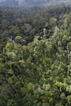 Selectively logged forest in Borneo -- sabah_aerial_2326