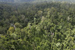 Selectively logged forest in Borneo -- sabah_aerial_2327