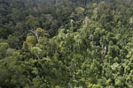 Selectively logged forest in Borneo -- sabah_aerial_2328
