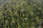 Selectively logged forest in Borneo -- sabah_aerial_2330