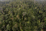 Selectively logged forest in Borneo -- sabah_aerial_2331