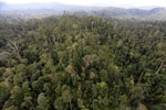Selectively logged forest in Borneo -- sabah_aerial_2332