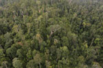 Selectively logged forest in Borneo -- sabah_aerial_2333
