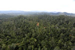 Selectively logged forest in Borneo -- sabah_aerial_2335