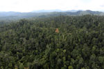 Selectively logged forest in Borneo -- sabah_aerial_2337