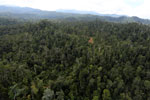 Selectively logged forest in Borneo -- sabah_aerial_2338